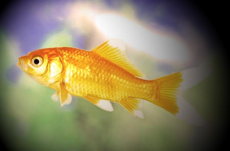 梦见鱼是什么意思,梦见鱼代表什么,梦见鱼是好事吗?