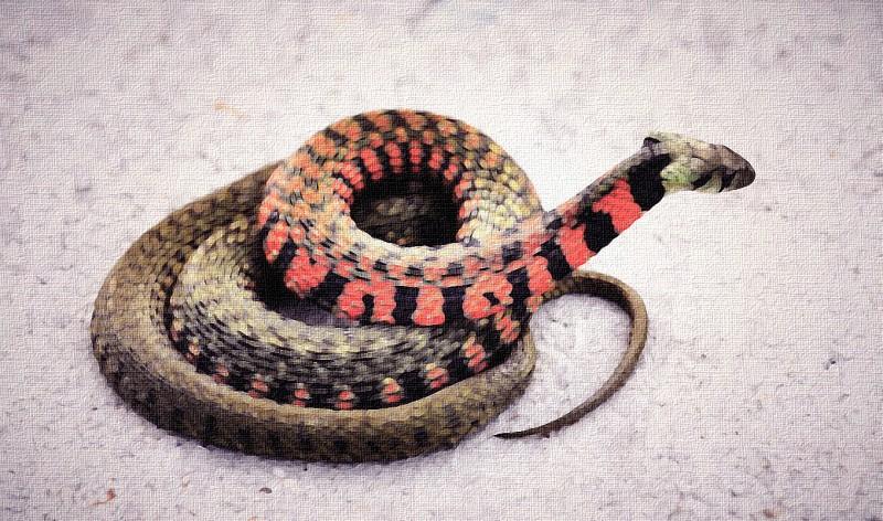 梦见杀蛇是什么意思?梦见打死蛇代表什么?梦见打蛇好不好?