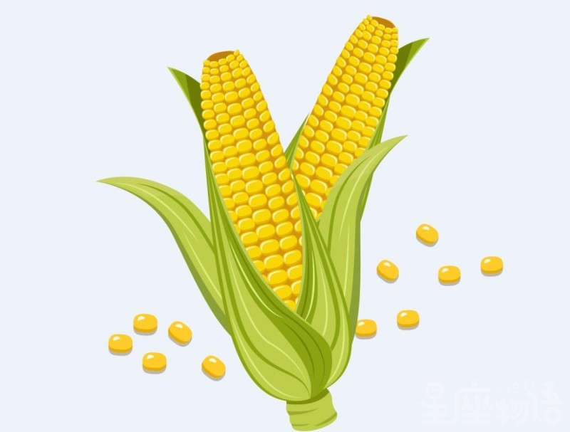 梦见玉米是什么意思 梦见玉米是好事吗 梦见玉米代表什么